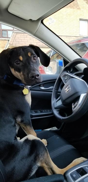 Driving_Yzma[1]