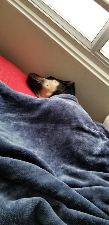 Sleepy_Yzma[1]